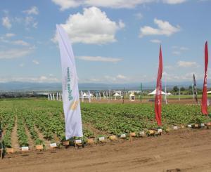 BASF Добив плюс експо 2015 Нови Хан