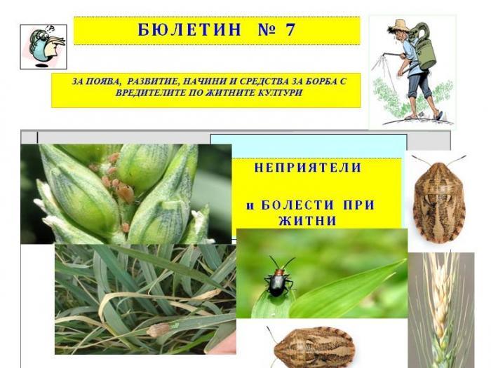 Растителна защита при житни през май - Бюлетин 7 / 2017