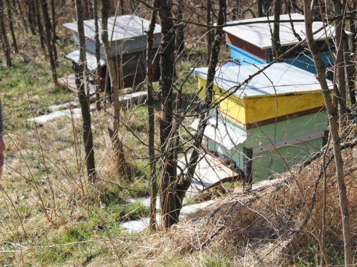 Добри съвети за пчеларите и животновъдите през ноември