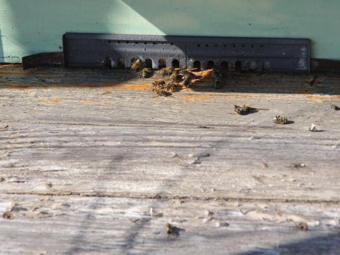 Добри съвети за пчелите през декември