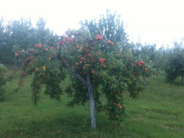 Празник на плодородието в град Кюстендил