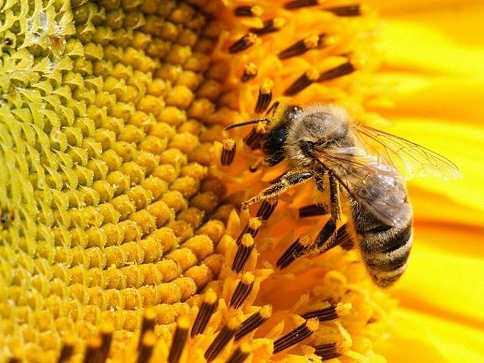 От 19 декември  стартира приемът на документи за пчеларската програма за 2018 г.