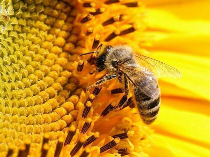 2,4 млн. лева за пчеларите по de minimis