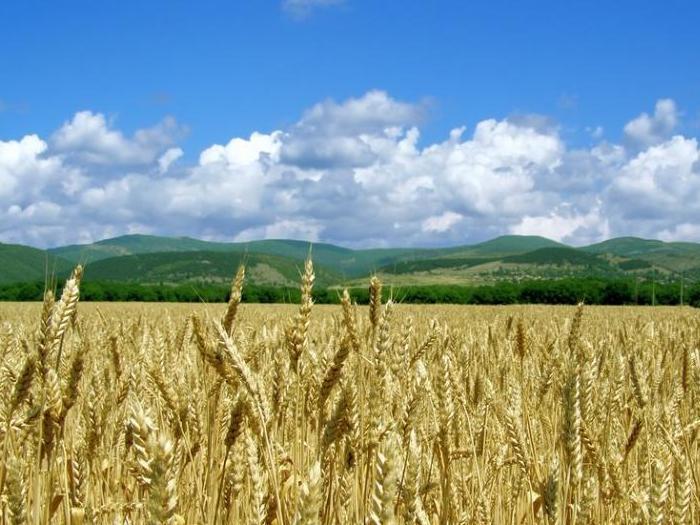 Руското зърно шества на международните пазари за сметка на американското