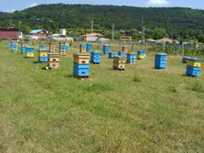 Промени уреждат подпомагането  по агроекологичната мярка за практикуващите подвижно пчеларство