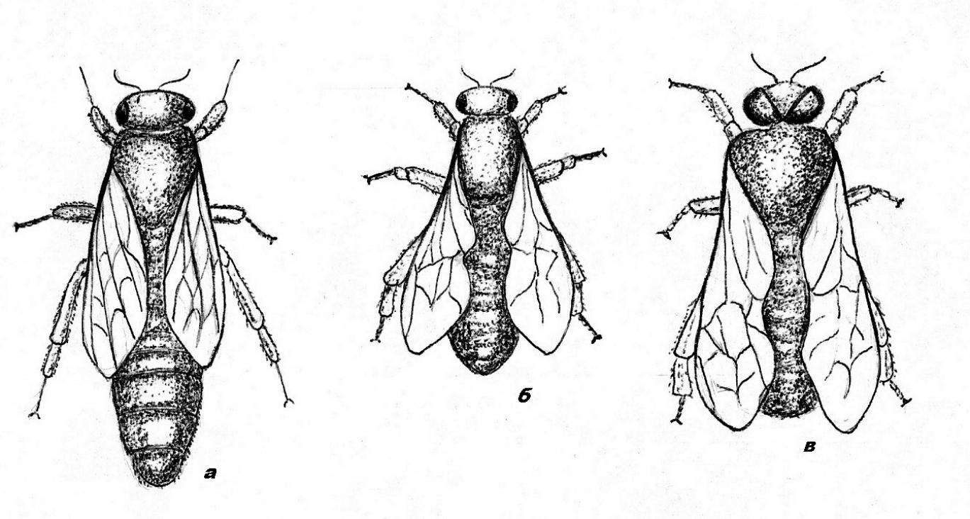 За пчеларя през ноември
