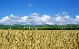 Инвестициите в агросектора направиха руската пшеница много по-конкурентноспособна