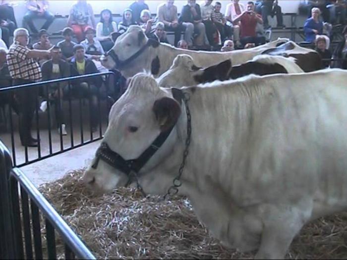 Организаторите си поставят за цел да съберат за пореден път на едно място животновъди от цялата страна