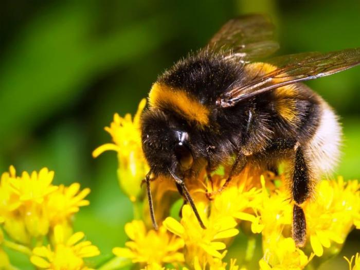 Де минимис пчели 2015