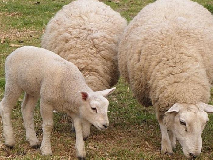 Право на подпомагане по схемата имат земеделски стопани