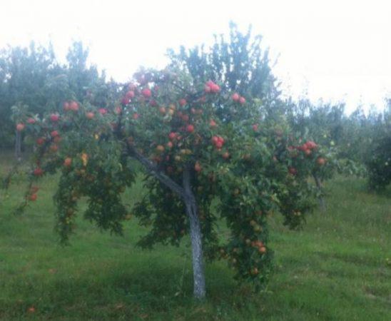 Ежегодно в края на септември или началото на октомври месец в град Кюстендил се отбелязва празникът на плодородието