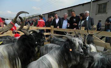Гостите на четвъртия празник на животновъдството ще видят уникални стари български породи.