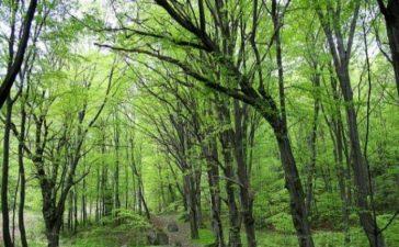 Седмица на гората – 07 – 13.04.2014 г.
