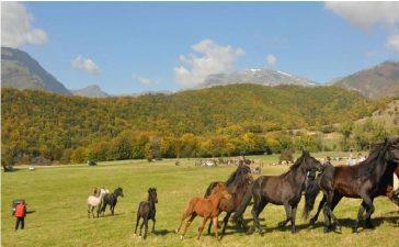 Типичните за района каракачански овце и коне