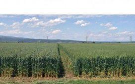 С продуктите на ДюПон Растителна Защита земеделските производители не само откриват потенциала на своите култури