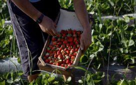 Схемите за директни плащания и национални доплащания са насочени към активни земеделски стопани.