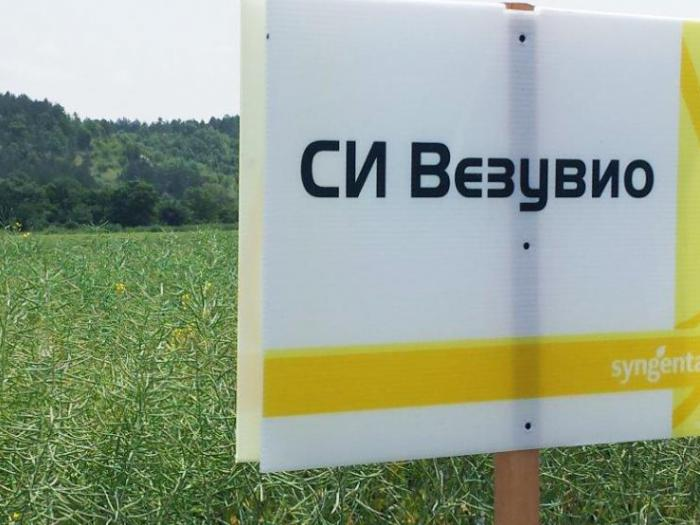 Първите сеитби на рапица за стопанската 2017-2018 в България вече са факт