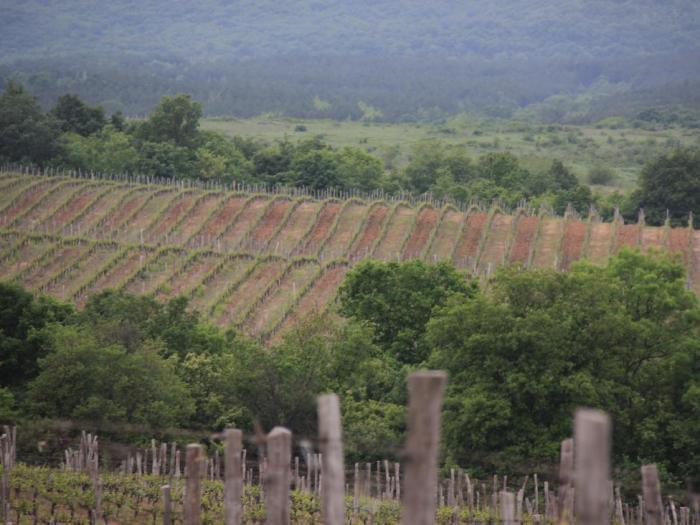 """Сектор """"Зърнопроизводство"""" остава водещ приоритет в политиката"""