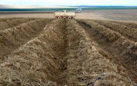 До 30 май 2014 г. производителите на картофи подават заявления по схемата за борба с телените червели по картофите