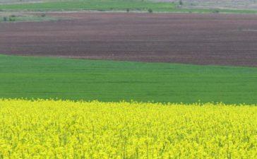 Субсидията ще се изплаща по ново направление от мярка 10 Агроекология и климат