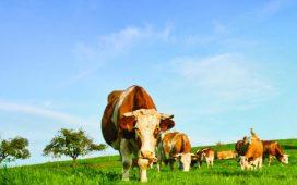 """Документи се подават в областните дирекции на ДФ """"Земеделие"""" по постоянен адрес на физическите лица или адрес на търговска регистрация на юридическите лица."""