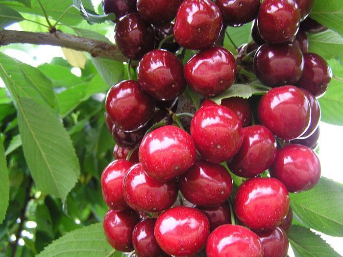 Компанията е специализирана в производството на замразени плодове и зеленчуци