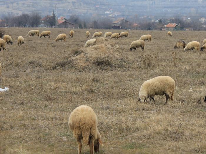 6 млн. евро ще бъдат разпределени между животновъдите по 4 различни схеми