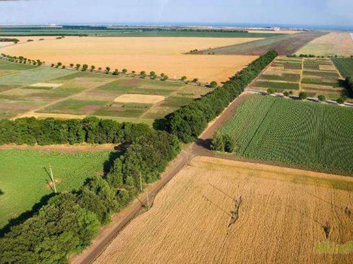 Удължаването на мораториума за продажба на земя на чужденци е теоретично възможно