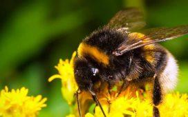 """За трета поредна година кандидатите с одобрени проекти по мерки Б и Г от Националната програма по пчеларство (НПП) 2014-2016 могат да кандидатстват за кредити от ДФ """"Земеделие""""."""