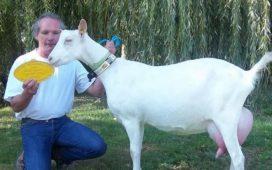 Експерт призова все повече фермери да се ориентират към козевъдството