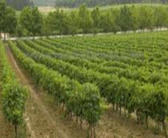 Производство на грозде и вино – реколта'2010