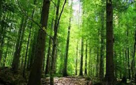 """Дирекцията на Природен парк """"Рилски манастир"""" към Изпълнителната агенция по горите получи фотокапани за наблюдение на животинските видове"""
