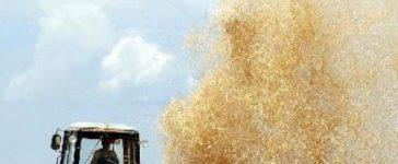 МЗХ ще подкрепи родното ни производство с решението си за отпускане на кредитна линия в рамките на 10 000 000 лева за закупуване на минерални торове и/или семена за производство на пшеница