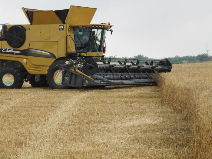 Зърнените и маслодайни култури запазват доминиращите си позиции
