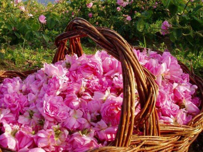 Розопроизводителите могат да бъдат спокойни
