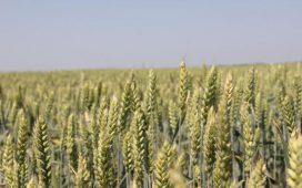 Отворено писмо до медиите до министъра на земеделието и храните