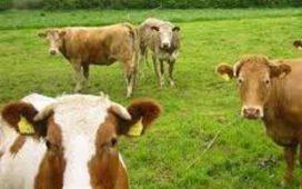 Ако при промяна в броя на животните фермерите пропуснат този срок може да бъдат санкционирани