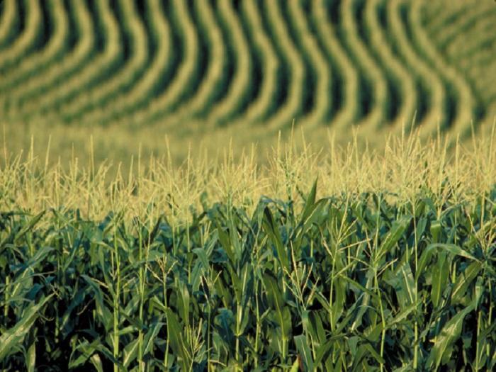 Във връзка с изготвяне на споразумения за ползване на земеделска земя за стопанската 2012 – 2013 година всеки собственик трябва да подава декларация по образец в Общинска служба по земеделие по местонахождение на имота
