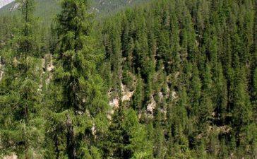 3 685 дка с иглолистни и широколистни гори засегнати от пожари през това лято