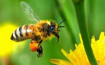 """""""Националната програма по пчеларство за тригодишния период 2011-2013 г"""