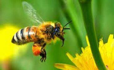 План за подкрепа здравето на пчелите са предложили Syngenta и Bayer