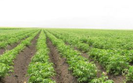 Наредба 14 от 28 май 2015 г. за прилагане на Мярка 6.1 Стартова помощ за млади земеделски стопани