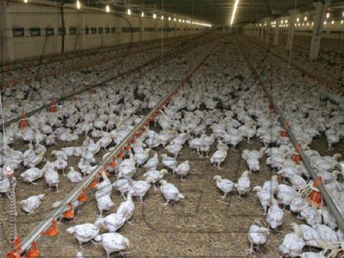 Общо около 20 млн. лева са получили фермерите за изпълнение на ангажименти за хуманно отношение