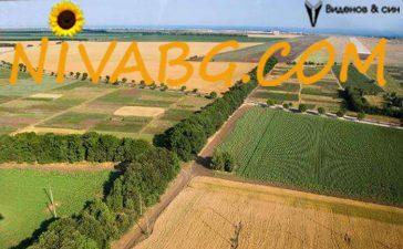 Започва есенната кампания срещу вредители по иглолистните дървета в горските територии