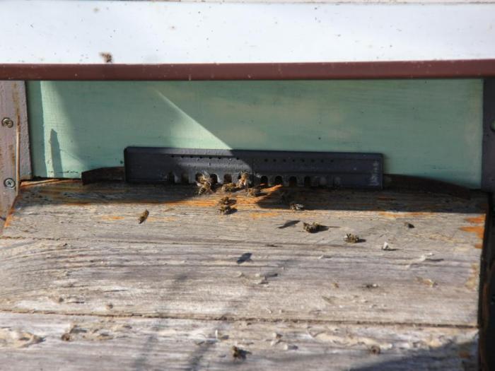 Намаляват пчеларите като цяло и заедно с тях и пчелните семейства