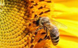 От помощта ще се възползват пчелини с между 20 и 200 кошера