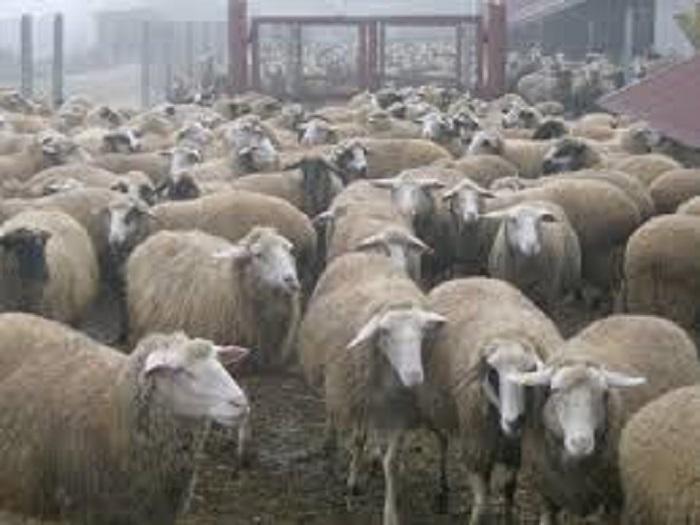 Фермерите получават 5 млн. лева за изхранване на овце и кози