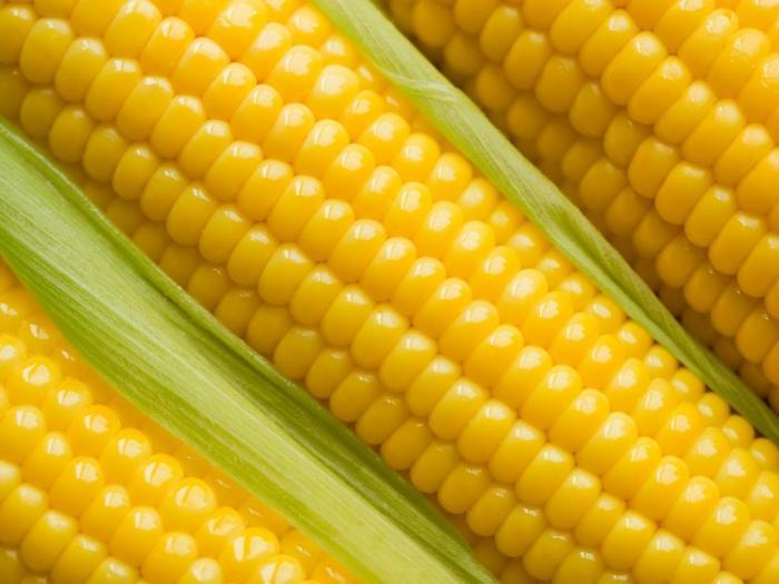 Страните-членки на Европейския съюз незабавно да забранят отглеждането на генно-модифицирана царевица като единствена категория ГМ-култури