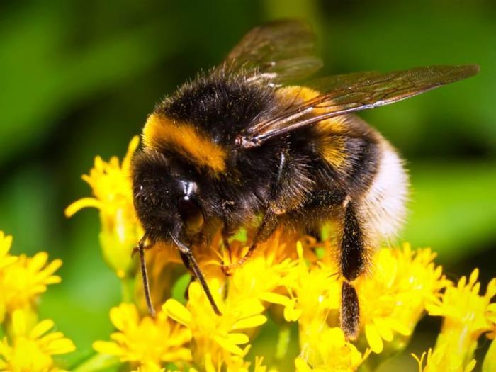 ДФЗ се подготовя за новия прием на заявления за 2015 г. за кредити за пчеларство