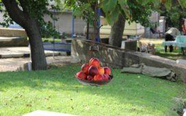 """Тринадесетото издание на празника """"Златна праскова"""" 2014 г. се провежда в Сливенското село Гавраилово"""